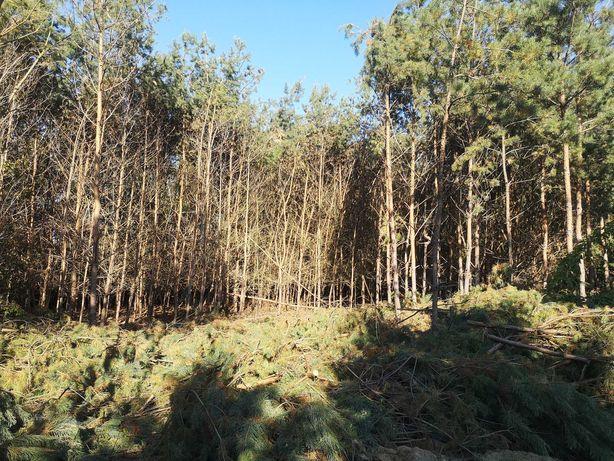 Oddam las do wycięcia za DARMO