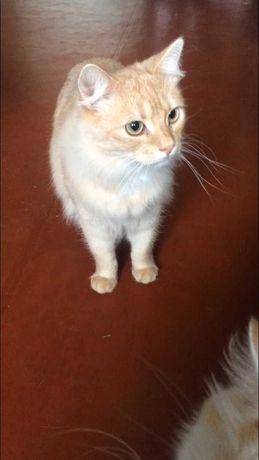 Красивый, рыжий котик в Добрые, ответственные руки!!!