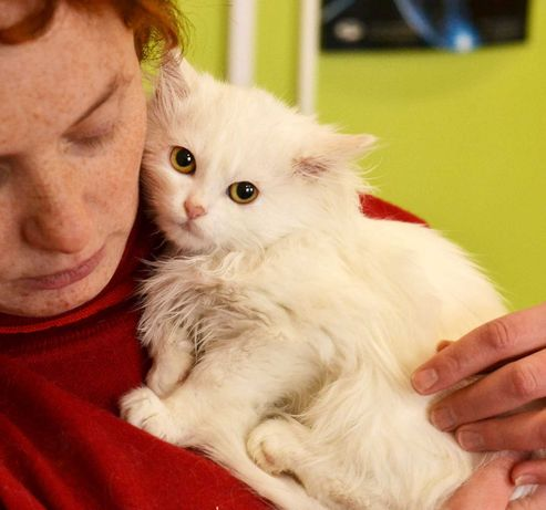 Мега ласковый пушистик в белой шубке, котенок Лилия, 3 мес, кошка, кот