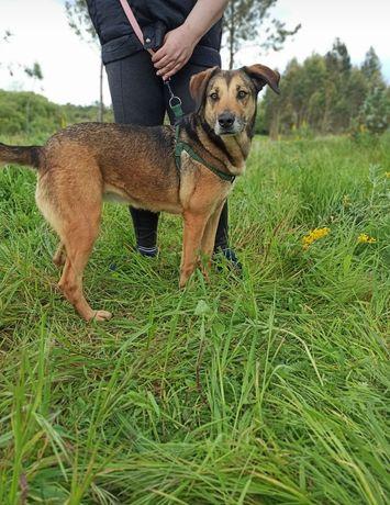 Linda- cachorra de porte médio para adoção