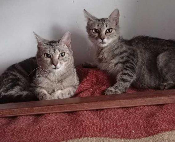 Dwie kocie mięciutkie przylepki szukają domków na stałe