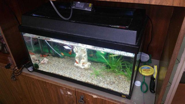 Аквариум с полным набором и рыбками
