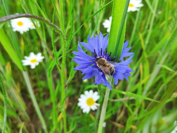Rodzina pszczela, rój pszczeli