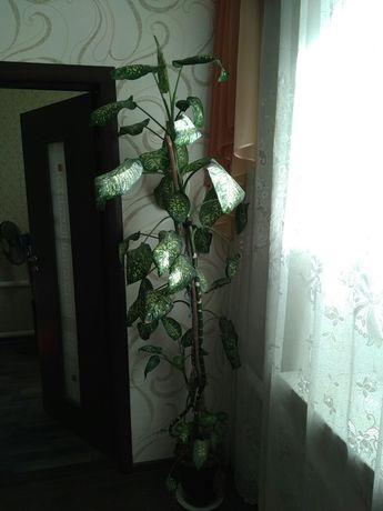 Дефинбахия не прихотливое растение