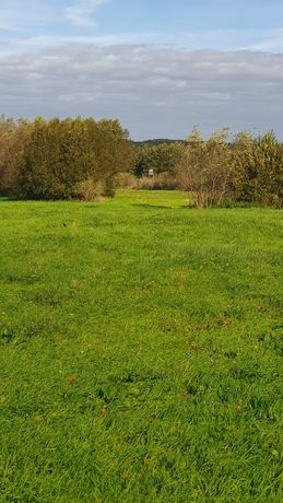 Sprzedam łąki w dolinie Noteci 46ha