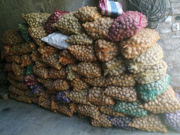 Ziemniak pastewne / sadzeniaki