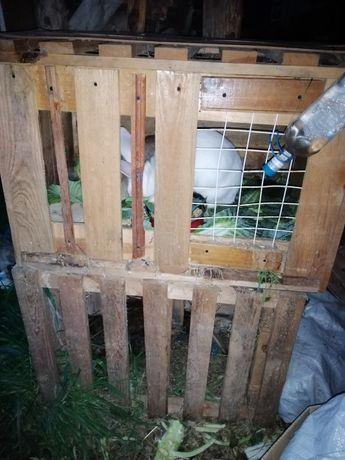 Klatka dla królików / królika