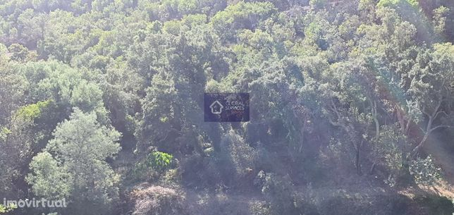 Vende-se Terreno Rústico com ruína Selão Barranco das Canas