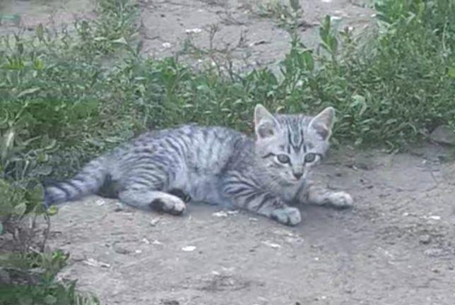 Маленький тигренок в добрые руки, красивый котенок, котята