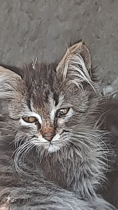 Срочно!Котенок,котята,кошка,кот Кривой Рог - изображение 1