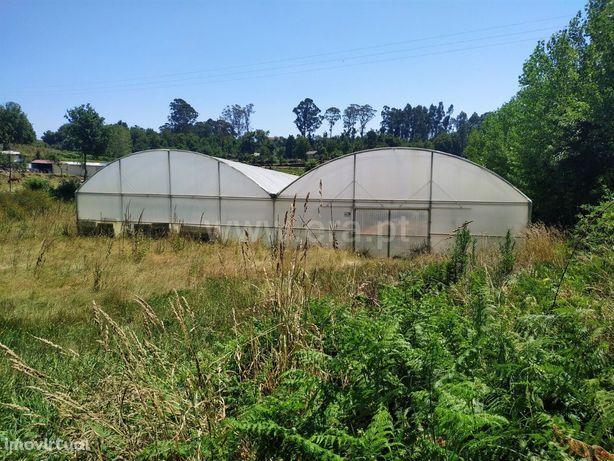 Terreno rústico com 10.000 m2 em Ribeiros