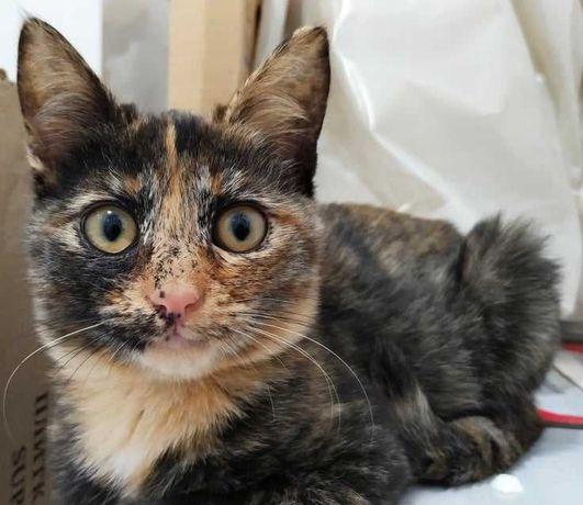 Красивый котенок девочка 3.5 мес