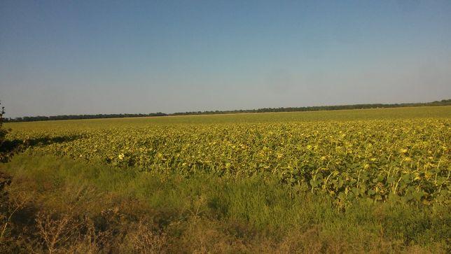 Продам земельный пай 7.5 гектар