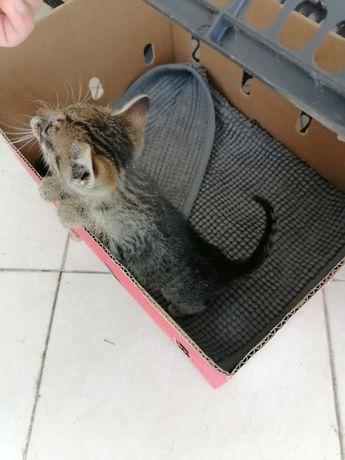 Gatinha para adopção