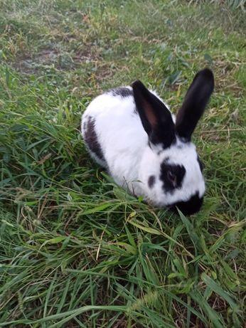 Кролик бабочка мальчик 10 мес