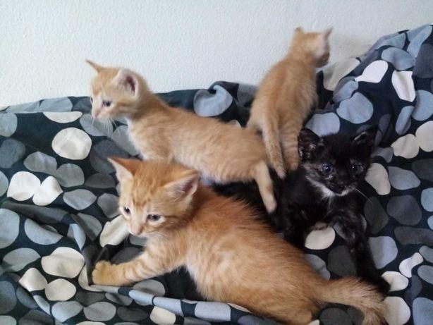 Gatos para adopção