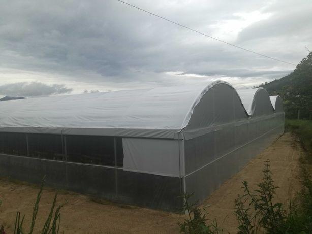 Estufa agrícola com 2 anos