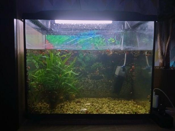 Продам аквариум с рыбками и фильтром