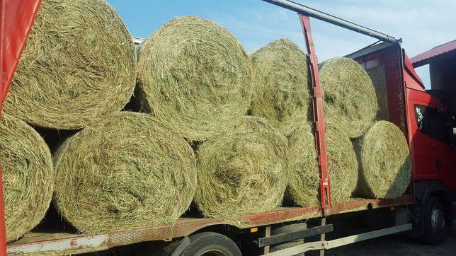 Suche Siano tegoroczne dla koni kucyków - transport gratis