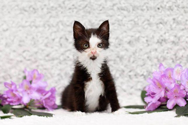 Młynka - 2-miesięczna, pogodna koteczka