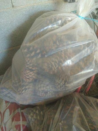 Vende-se sacas de Pinhas