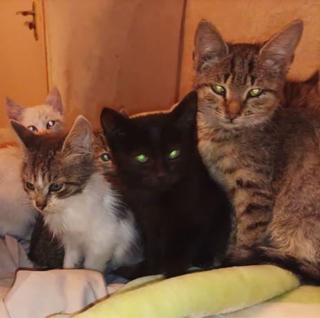 Очень красивые котята ждут своих хозяев.