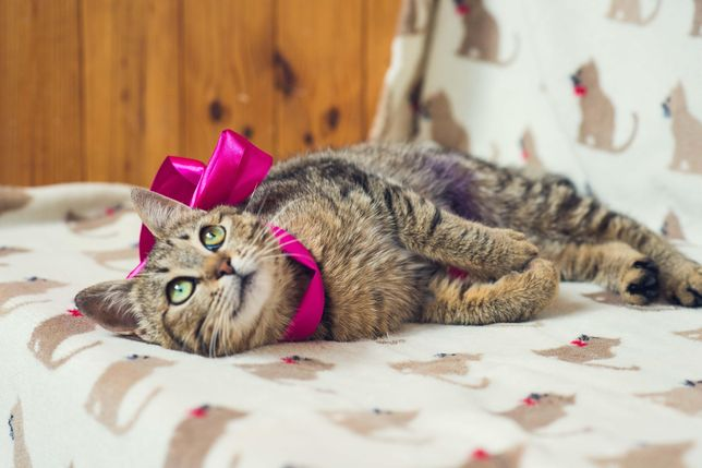 Кошечка котенок девочка 7 месяцев