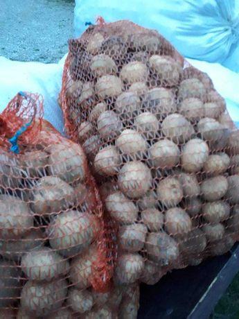 Ziemniaki paszowe 0,25zł za 1kg ( duzo sadzeniaka)