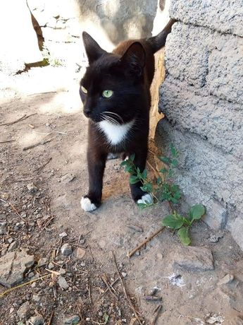 Котик ждёт своего человека!