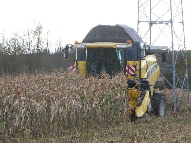 omłot kukurydzy, koszenie kukurydzy, suszenie kukurydzy, siew kuku