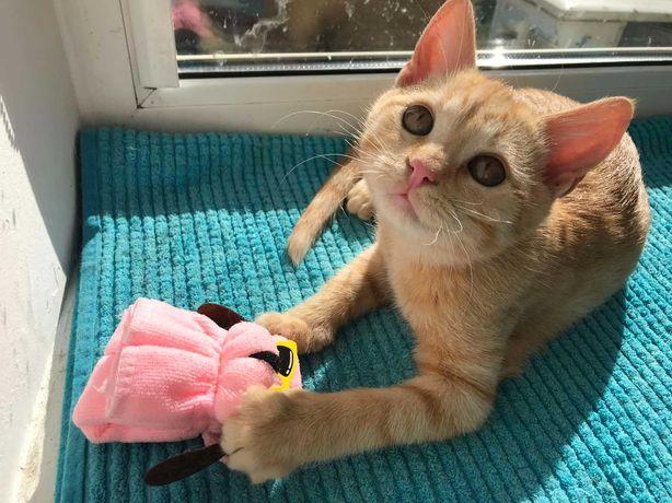 Солнечный котик,5 мес.