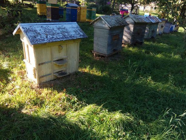 Rodziny pszczele z ulami warszawski zwykły ramki ogrody likwidacja