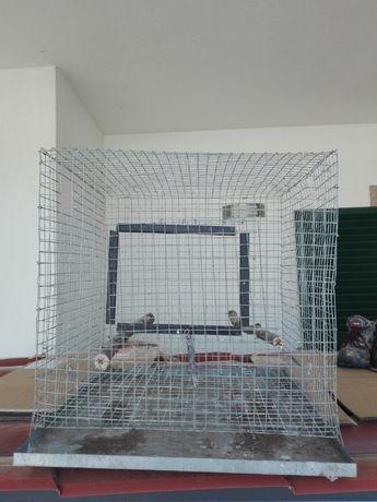 Troco Viveiros em Rede pôr aves