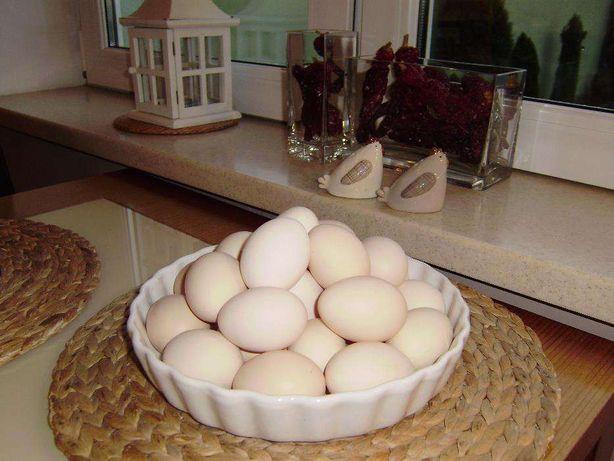 JAJA zielononóżki , smaczne i zdrowe jaja !