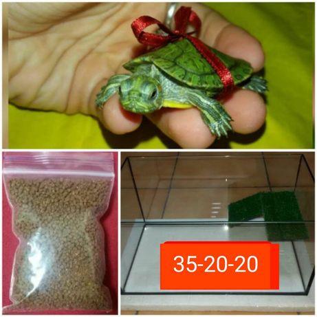 Комплект: маленькая черепаха+террариум+корм. Доставка по Украине