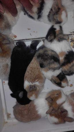 Kit coelhos anões meiguinhos