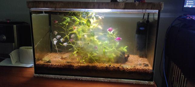 Akwarium 60L cały zestaw + ryby