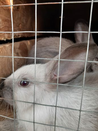 Продам кролі та нутрії
