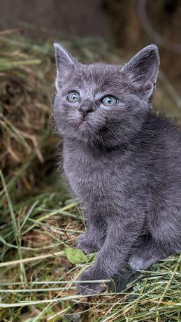 Даруємо котиків) в добрі руки!