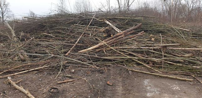 Oddam gałęzie za DARMO z  Bytom/Chorzów