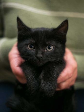 Маленькое чудо ищет дом, черный котенок - мальчик, кот котик, 1, 5мес