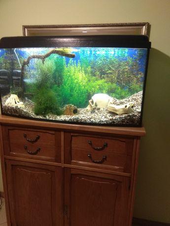 Akwarium 200l panorama sprzedam