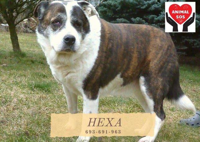 Hexa tęskni za Tobą