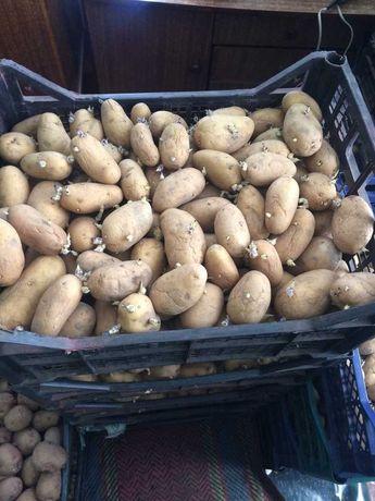 Продам картофель (семенной)