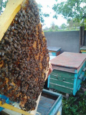 Бджолопакети з доставкою Вінницька область