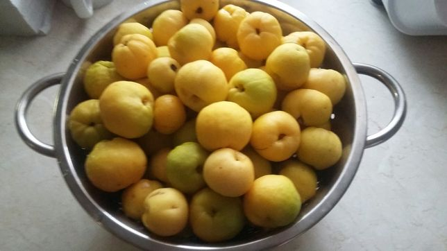 Pigwa owoce pigwowca japońskiego ekologiczne