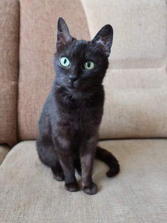 Maleńka kotka Miniusia