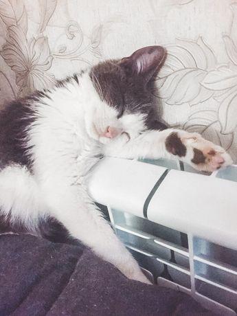 Котик 6 месяцев, в поисках любящей семьи