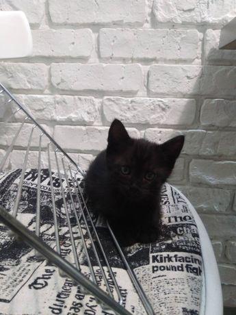 Котенок Отдам котенка (котята черные) в хорошие , любящие руки