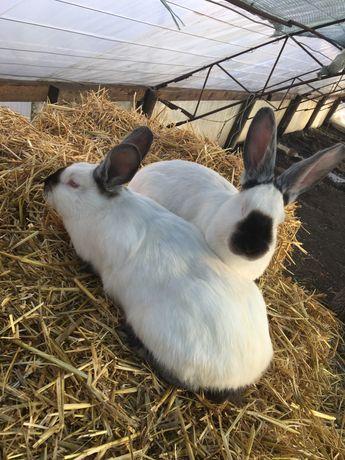 Кролики,кролі